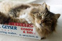 Town and Country Pet Sitting cat in a box