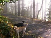 TC Pet Sitting - dog blog