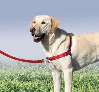 TC Pet Sitting - harness