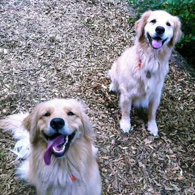 Town and Country Pet Sitting happy dogs