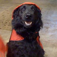 Town and Country Pet Sitting dog with a raincoat