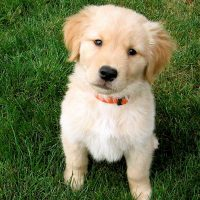 Town and Country Pet Sitting puppy