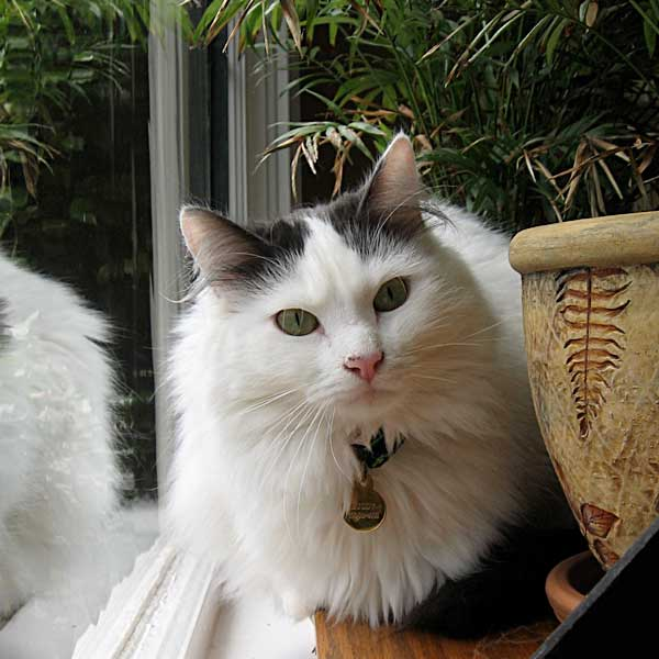 Town and Country Pet Sitting - Cat care in Portland
