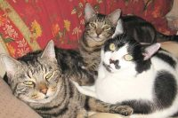 Town and Country Pet Sitting kitties