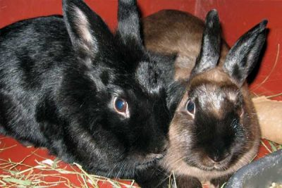 Town and Country Pet Sitting- bunnies