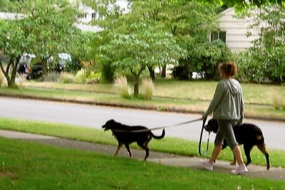 Town and Country Pet Sitting - dogs on a walk