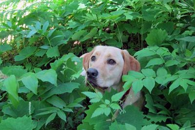 Town and Country Pet Sitting - dog in bush