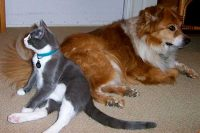Town and Country Pet Sitting cat and dog