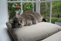 Town and Country Pet Sitting cat nap