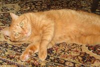 Town and Country Pet Sitting cat lounging